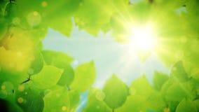Τα όμορφα πράσινα φύλλα δέντρων αποκαλύπτουν το φως του ήλιου απόθεμα βίντεο