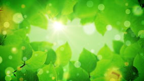 Τα όμορφα πράσινα φύλλα δέντρων αποκαλύπτουν το φως του ήλιου φιλμ μικρού μήκους