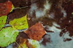 Τα όμορφα φύλλα φθινοπώρου περιήλθαν στο νερό Στοκ φωτογραφίες με δικαίωμα ελεύθερης χρήσης