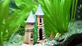 Τα όμορφα ψάρια κολυμπούν στο νερό ενυδρείων φιλμ μικρού μήκους