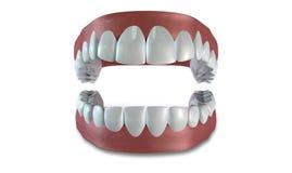 Τα δόντια ανοικτό που απομονώνεται που τίθενται Στοκ Εικόνες