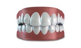 Τα δόντια θέτουν κλειστός απομονωμένος Στοκ Φωτογραφία