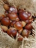 Τα ώριμα κάστανα στο hessian γιούτας σάκο τοποθετούν σε σάκκο στην αγορά ` s disp Στοκ εικόνα με δικαίωμα ελεύθερης χρήσης
