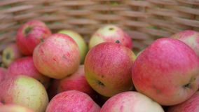 Τα ώριμα μήλα βρίσκονται σε ένα ξύλινο καλάθι φιλμ μικρού μήκους