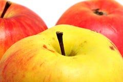 Τα ώριμα μήλα κλείνουν αυξημένος στοκ φωτογραφίες
