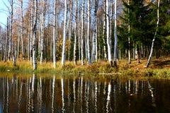 τα backfiling δασικά ρωσικά Στοκ φωτογραφία με δικαίωμα ελεύθερης χρήσης
