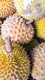 Τα durians στοκ φωτογραφίες