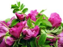 τα floral λουλούδια ανασκόπησης αυξήθηκαν άγρια περιοχές Στοκ εικόνα με δικαίωμα ελεύθερης χρήσης