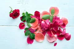 τα floral πέταλα ανασκόπησης αυξήθηκαν σειρά Στοκ φωτογραφίες με δικαίωμα ελεύθερης χρήσης