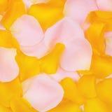 τα floral πέταλα ανασκόπησης αυξήθηκαν σειρά Στοκ φωτογραφία με δικαίωμα ελεύθερης χρήσης