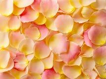 τα floral πέταλα ανασκόπησης αυξήθηκαν σειρά Στοκ Εικόνες