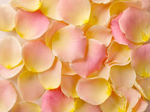 τα floral πέταλα ανασκόπησης αυξήθηκαν σειρά Στοκ Εικόνα