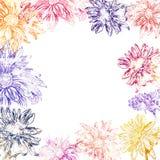Τα floral σύνορα άνοιξη με το χέρι χρωμάτισαν το όμορφο χρυσάνθεμο λουλουδιών στο άσπρο υπόβαθρο Βοτανική απεικόνιση διανυσματική απεικόνιση