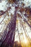 Τα foliages των δέντρων από την κατώτατος-άποψη Στοκ φωτογραφίες με δικαίωμα ελεύθερης χρήσης