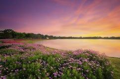 Τα LAK και τα λουλούδια σταθμεύουν δημόσια Στοκ εικόνα με δικαίωμα ελεύθερης χρήσης