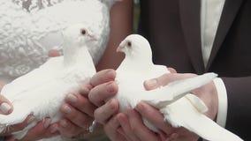 Τα newlyweds κρατούν τα άσπρα περιστέρια φιλμ μικρού μήκους