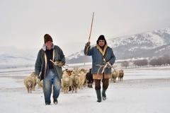Τα shepards Στοκ φωτογραφίες με δικαίωμα ελεύθερης χρήσης