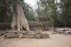 Τα Watt Angkor - τοίχοι καταστροφών ναών TA Prohm της khmer πόλης Angkor wat εγκαταστήστε στην Καμπότζη - δηλώνουν το μνημείο Στοκ εικόνα με δικαίωμα ελεύθερης χρήσης