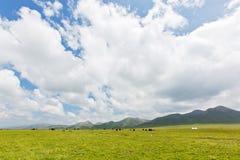 Τα yaks στα λιβάδια 2 ορεινών περιοχών στοκ φωτογραφία