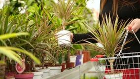 Τεθειμένα λουλούδια στο κάρρο αγορών φιλμ μικρού μήκους