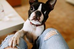 Τεθειμένο σκυλί πόδι στοκ εικόνες