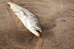 Τελειωμένα ψάρια Στοκ Εικόνες