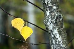τελευταία φύλλα Στοκ Φωτογραφία