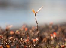 Τελευταία φύλλα Στοκ φωτογραφία με δικαίωμα ελεύθερης χρήσης
