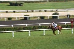 Τελευταία jockey και άλογο στον αγώνα που τρέχει προς τη γραμμή τερματισμού Στοκ Φωτογραφία