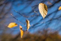 Τελευταίο κίτρινο φύλλο του φθινοπώρου στοκ φωτογραφίες
