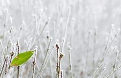 Τελευταίο πράσινο φύλλο Στοκ Εικόνες