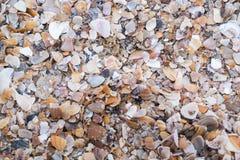 Τεμάχια της Shell στην ακτή Υπόβαθρο σύσταση ταπετσαρία Στοκ φωτογραφία με δικαίωμα ελεύθερης χρήσης
