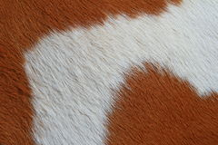 Τεμάχιο ενός δέρματος μιας αγελάδας Στοκ Εικόνα