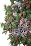 Τεμάχιο κινηματογραφήσεων σε πρώτο πλάνο ενός δέντρου που διακοσμείται με τους κώνους πεύκων, που απομονώνονται στο άσπρο υπόβαθρ Στοκ Φωτογραφίες