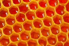 Τεμάχιο της κηρήθρας με το σύνολο κυττάρων του μελιού Στοκ φωτογραφία με δικαίωμα ελεύθερης χρήσης