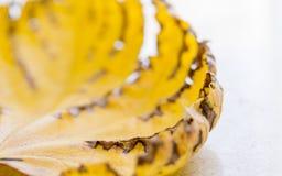 Τεμάχιο του ξηρού κίτρινου φύλλου στοκ εικόνες με δικαίωμα ελεύθερης χρήσης