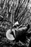 Τεμαχίζοντας δάσος στοκ φωτογραφία με δικαίωμα ελεύθερης χρήσης