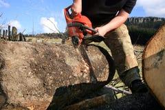 Τεμαχίζοντας δέντρα για το καυσόξυλο, εργασία χωρών Στοκ Φωτογραφία