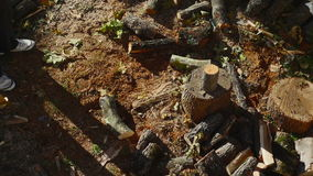 Τεμαχίζοντας ξύλο ατόμων με ένα τσεκούρι 05 απόθεμα βίντεο