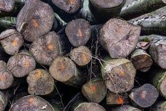 Τεμαχισμένη χαρακτηρισμένη κούτσουρα δασική αποδάσωση μεταφορών βιομηχανίας Στοκ φωτογραφία με δικαίωμα ελεύθερης χρήσης
