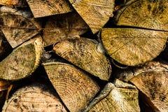 τεμαχισμένο δάσος σωρών Στοκ Εικόνες