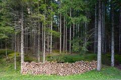 τεμαχισμένο δασικό δάσος Στοκ Φωτογραφία