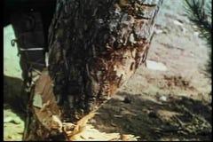 Τεμαχισμός κάτω από το δέντρο απόθεμα βίντεο