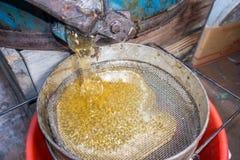 Τεντώστε το χυμένο μέλι μέσω ενός κόσκινου Φιλτράροντας ακατέργαστο μέλι Έκχυση μελιού μέσω ενός κόσκινου από τον εξολκέα μελιού Στοκ εικόνα με δικαίωμα ελεύθερης χρήσης