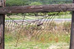 Τεράστια αράχνη σε ένα spiderweb Στοκ φωτογραφία με δικαίωμα ελεύθερης χρήσης