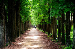 τεράστια δέντρα Στοκ Εικόνα