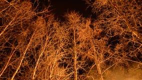 Τεράστια ξύλινη πυρκαγιά στη χειμερινή νύχτα απόθεμα βίντεο