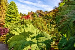 Τεράστια πράσινα φύλλα του burdock, των δέντρων και των όμορφων Μπους Στοκ φωτογραφία με δικαίωμα ελεύθερης χρήσης