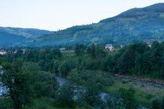 Τεράστια πυκνά δέντρα με ένα ρεύμα Στοκ Εικόνες