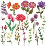 Τεράστια συλλογή των floral στοιχείων: λουλούδια, φύλλα, κλάδοι διανυσματική απεικόνιση